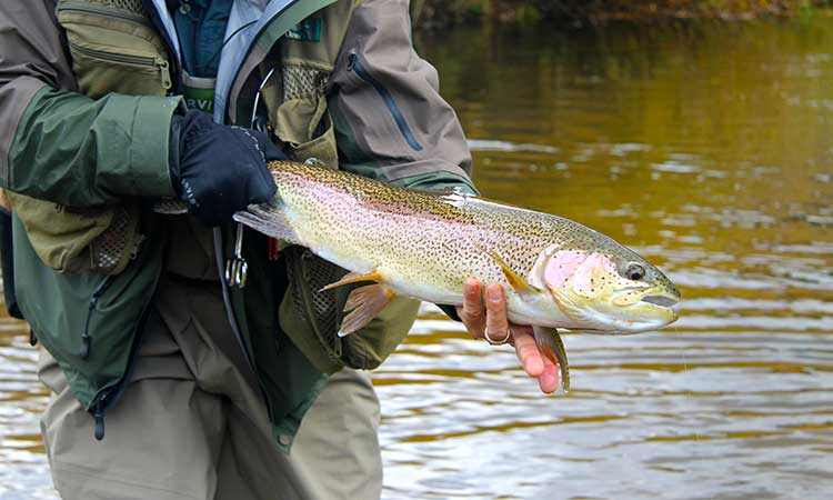 alberta-rainbow-trout-photo1