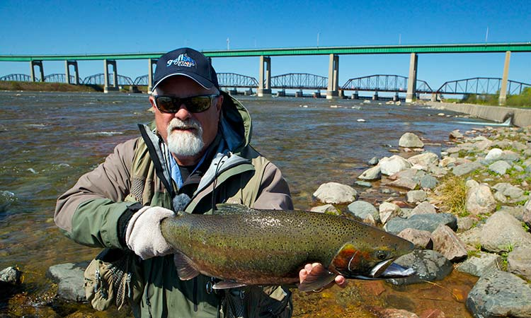 algoma-steelhead-photo4