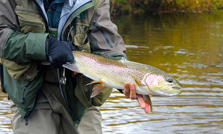 colorado-fly-fishing-photo1