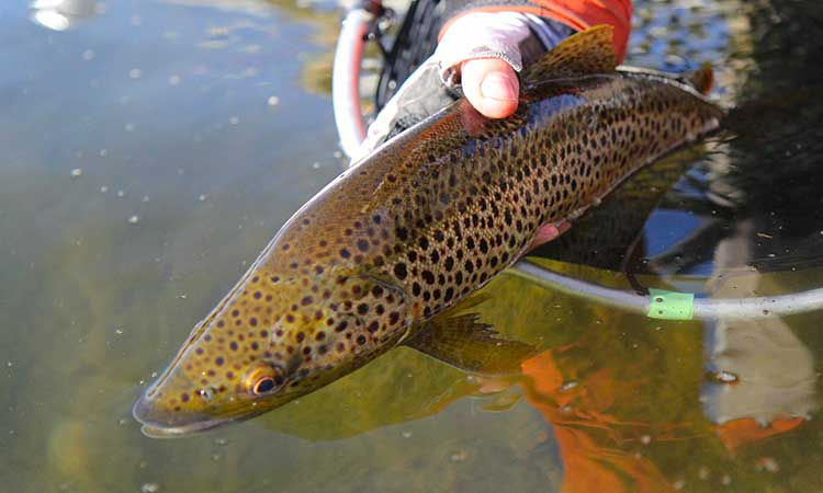 montana-fly-fishing-photo2