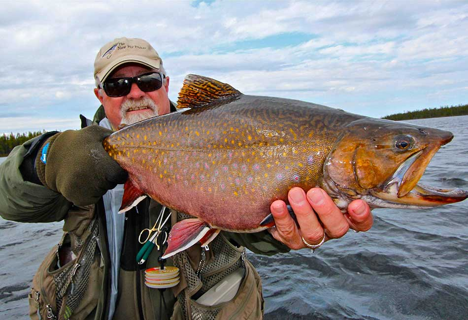 newfoundland-brook-trout