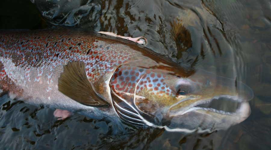 nova-scotia-fly-fishing-photo4jpg
