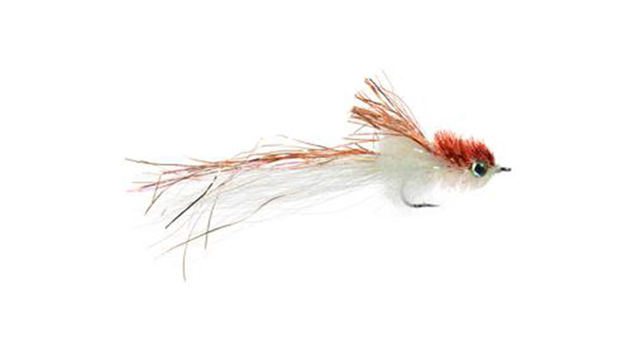 Murdich-Mini-Minnow_COP