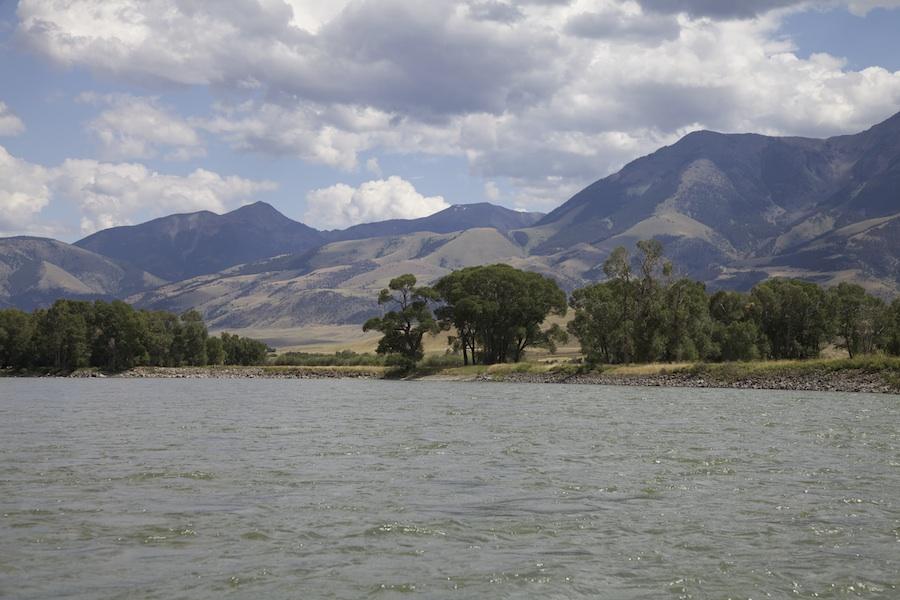 Montana Terrestrials